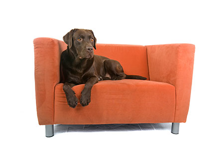 Professional Upholstery Cleaning for Furniture in Upper Michigan